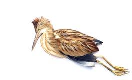 död fågel Arkivfoto