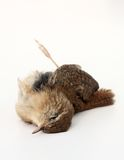 Död fågel Arkivfoton