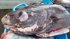 Död fisk Royaltyfri Bild