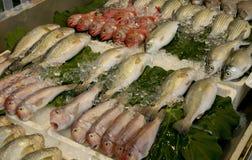 död fisk Arkivfoton