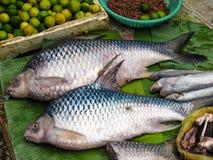 Död fisk i marknaden Royaltyfri Bild