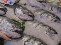 Död fisk på is på den offentliga marknaden i Seattle Royaltyfri Fotografi