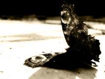 död fjäril Royaltyfria Bilder