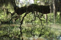Död flod, Hontoon ö, Florida Arkivfoto