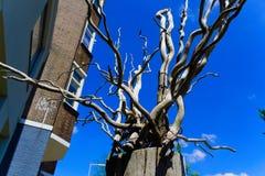 död garnering för trädfilialer royaltyfria foton