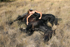 död häst Arkivbilder