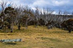 Död häst Gap Royaltyfri Bild
