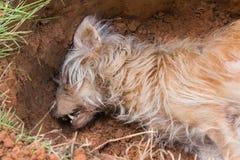 Död hund i grav Arkivfoton