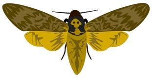 Död-huvud Hawkmoth Royaltyfri Fotografi