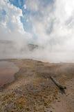 Död inloggning kusten av den varma våren för varma kaskader i den lägre Geyserhandfatet i den Yellowstone nationalparken i Wyomin Royaltyfria Bilder
