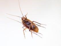 Död kackerlacka på en spegel Arkivbilder