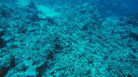 Död korallrev som dödas av global uppvärmning och klimatförändring arkivfoton