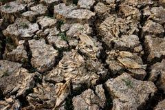 Död kris för global uppvärmning för torrt land för fisk Arkivfoto