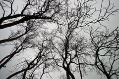 död landskaptree Royaltyfria Bilder