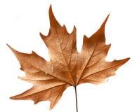 Död leaf royaltyfri bild