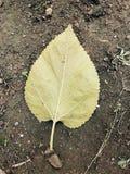 död leaf royaltyfria foton