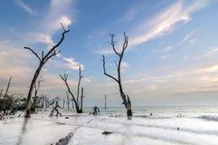 Död mangrove på stranden under dag Fotografering för Bildbyråer