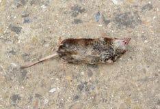 död mus Arkivbild