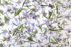 Död-nässlan blommar bakgrund royaltyfria foton