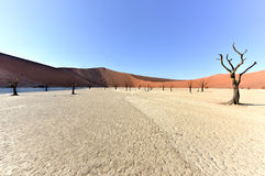 död namibia vlei Royaltyfri Fotografi