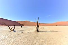 död namibia vlei Arkivfoton