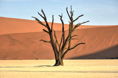 död namibia vlei Royaltyfri Foto