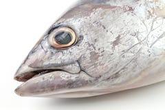 Död ny rå fregatttonfisk royaltyfria bilder