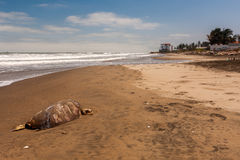 Död på stranden arkivbilder