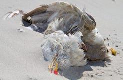 död seagull Arkivbilder