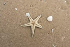 Död sjöstjärna på en sandstrand Royaltyfria Bilder
