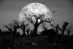 Död skog royaltyfria foton