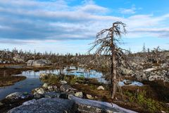 död skog Arkivfoto