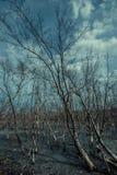 Död skog i ett träsk Arkivfoton