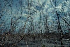 Död skog i ett träsk Arkivfoto