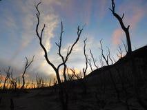 död skog och himlen arkivfoto