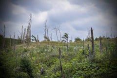 Död skog som brännas ned i de Kaukasus bergen Arkivfoton