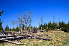 Död skogsmark Arkivbild
