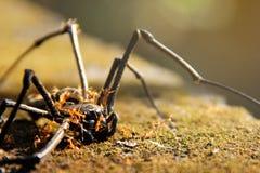 Död spindel royaltyfri bild