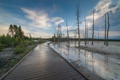 Död träd och strandpromenad på slinga för natur för springbrunnmålarfärgkruka under den blåa timmen i den Yellowstone nationalpar Royaltyfria Bilder