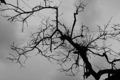 Död trädnatur arkivfoton