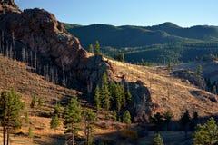 Död trädskog i berg Arkivbild