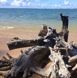 Död trädstam på stranden Arkivfoto
