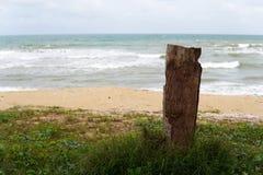 Död trädstubbe på stranden i sydkinesiska havet - bild royaltyfri fotografi