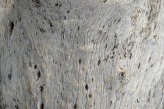 Död trädtextur 2 Arkivbilder