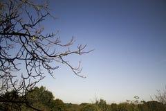 Död tree Arkivbild