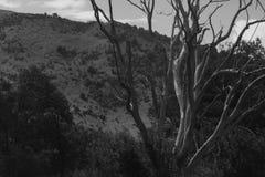 Död tree Arkivbilder