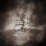 Död tree Arkivfoton