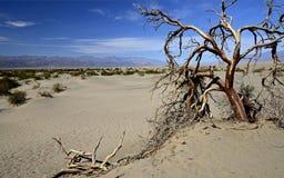 Död tree dal för Kalifornien dödUSA Arkivbilder