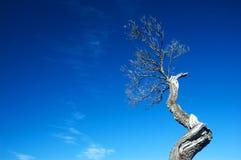 död tree för filial royaltyfri foto