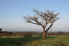 död tree för korall arkivfoton